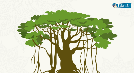 National Tree of India Banyan