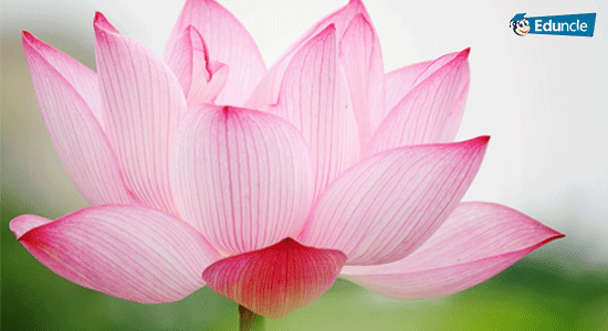The National Flower of India